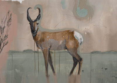 Antelope, 30 x 48, Oil and Acrylic on canvas