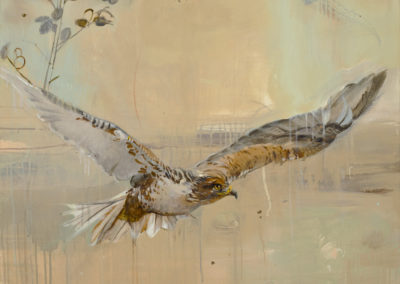 Ferruginous Hawk, 48 x 36, Acrylic on canvas