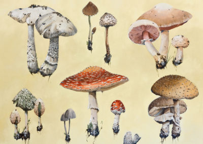Mushrooms, 48 X 36, Acrylic on canvas